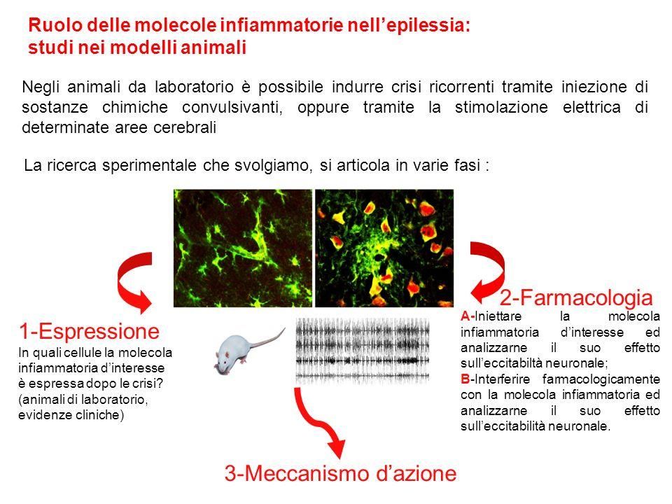 Ruolo delle molecole infiammatorie nellepilessia: studi nei modelli animali Negli animali da laboratorio è possibile indurre crisi ricorrenti tramite