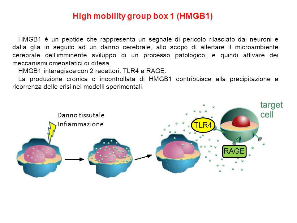 HMGB1 è un peptide che rappresenta un segnale di pericolo rilasciato dai neuroni e dalla glia in seguito ad un danno cerebrale, allo scopo di allertar