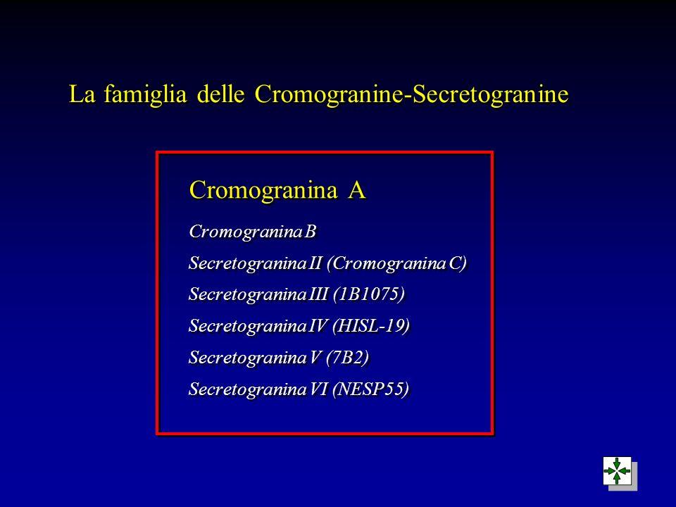 La famiglia delle Cromogranine-Secretogranine Cromogranina A Cromogranina B Secretogranina II (Cromogranina C) Secretogranina III (1B1075) Secretogran