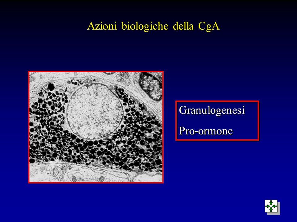 Granulogenesi Pro-ormone Granulogenesi Pro-ormone Azioni biologiche della CgA