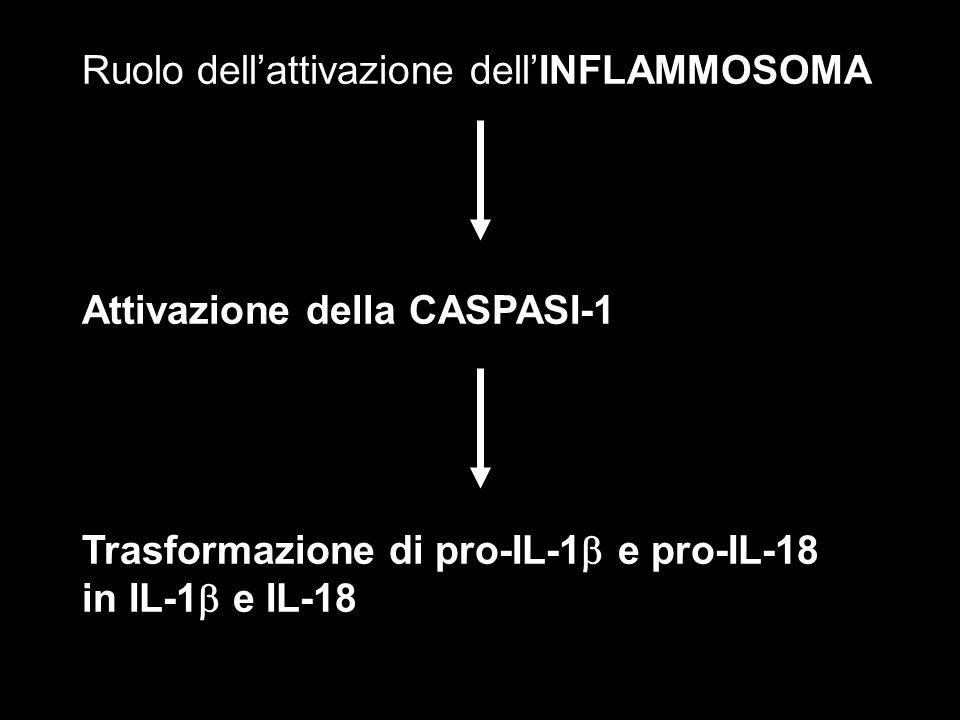 Ruolo dellattivazione dellINFLAMMOSOMA Attivazione della CASPASI-1 Trasformazione di pro-IL-1 e pro-IL-18 in IL-1 e IL-18