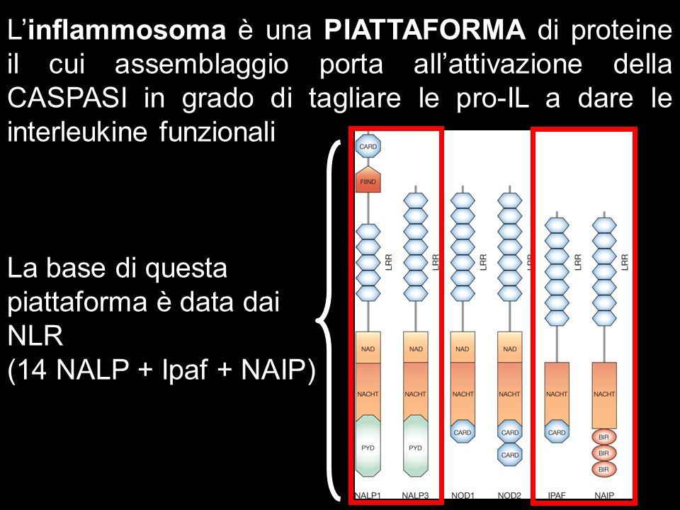 Linflammosoma è una PIATTAFORMA di proteine il cui assemblaggio porta allattivazione della CASPASI in grado di tagliare le pro-IL a dare le interleuki