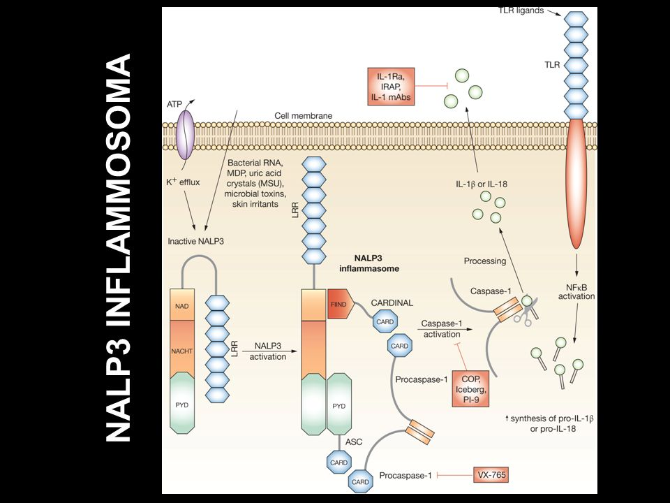 NALP3 INFLAMMOSOMA