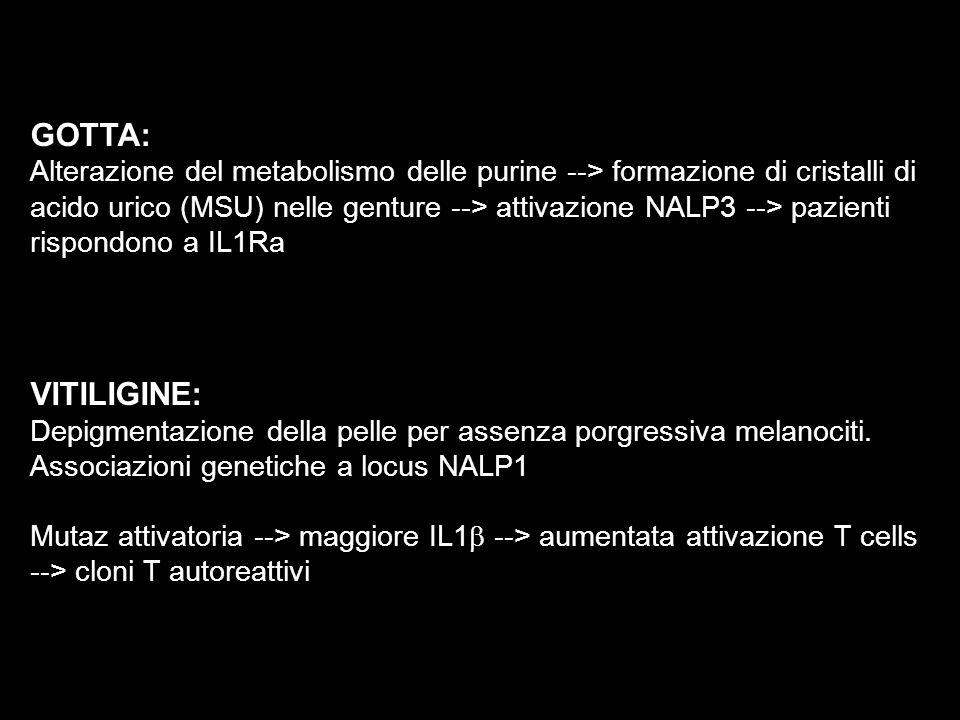 GOTTA: Alterazione del metabolismo delle purine --> formazione di cristalli di acido urico (MSU) nelle genture --> attivazione NALP3 --> pazienti risp