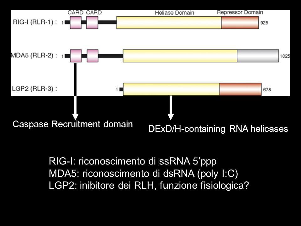 DExD/H-containing RNA helicases RIG-I: riconoscimento di ssRNA 5ppp MDA5: riconoscimento di dsRNA (poly I:C) LGP2: inibitore dei RLH, funzione fisiolo
