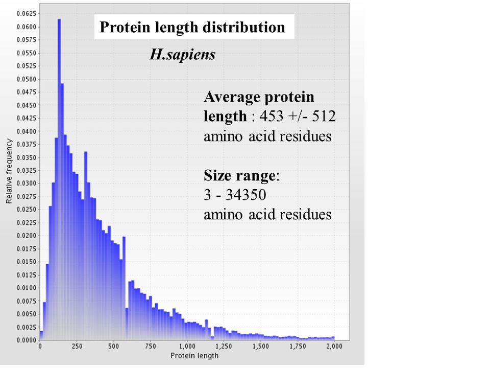 H.sapiens Protein length distribution Average protein length : 453 +/- 512 amino acid residues Size range: 3 - 34350 amino acid residues