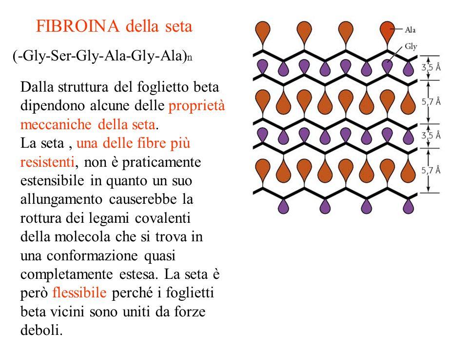 FIBROINA della seta (-Gly-Ser-Gly-Ala-Gly-Ala) n Dalla struttura del foglietto beta dipendono alcune delle proprietà meccaniche della seta. La seta, u