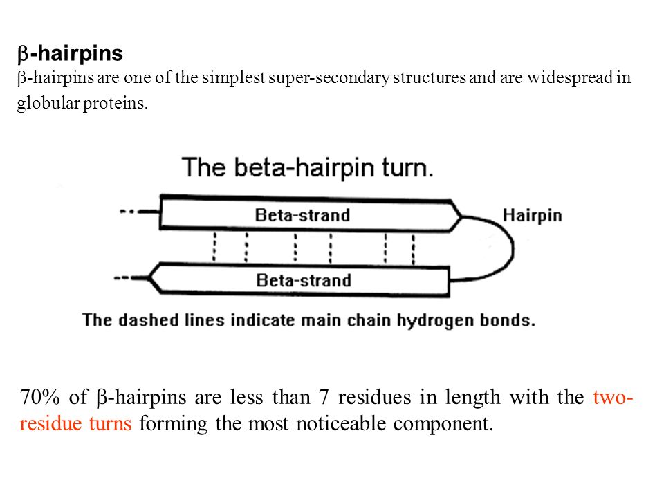 -hairpins -hairpins are one of the simplest super-secondary structures and are widespread in globular proteins. 70% of -hairpins are less than 7 resid