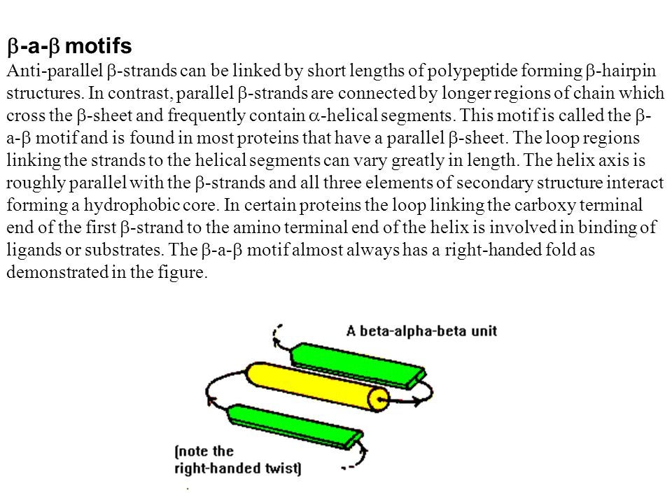 -a- motifs Anti-parallel -strands can be linked by short lengths of polypeptide forming -hairpin structures. In contrast, parallel -strands are connec