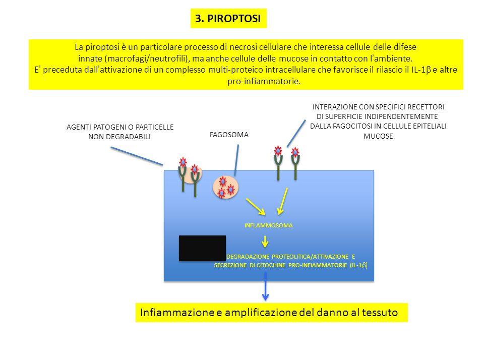 3. PIROPTOSI INFLAMMOSOMA AGENTI PATOGENI O PARTICELLE NON DEGRADABILI FAGOSOMA INTERAZIONE CON SPECIFICI RECETTORI DI SUPERFICIE INDIPENDENTEMENTE DA