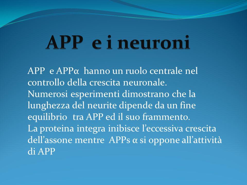 APP e APPα hanno un ruolo centrale nel controllo della crescita neuronale. Numerosi esperimenti dimostrano che la lunghezza del neurite dipende da un