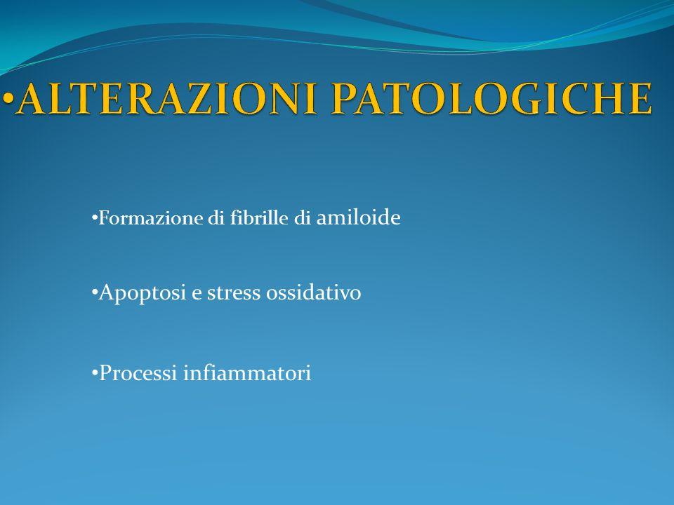 Apoptosi e stress ossidativo Processi infiammatori Formazione di fibrille di amiloide