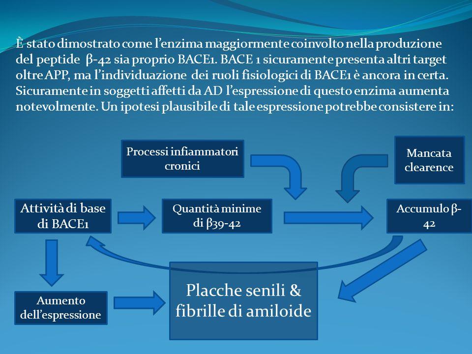 È stato dimostrato come lenzima maggiormente coinvolto nella produzione del peptide β-42 sia proprio BACE1. BACE 1 sicuramente presenta altri target o
