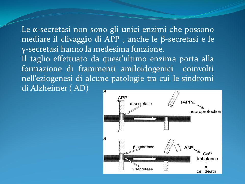 Le α-secretasi non sono gli unici enzimi che possono mediare il clivaggio di APP, anche le β-secretasi e le γ-secretasi hanno la medesima funzione. Il