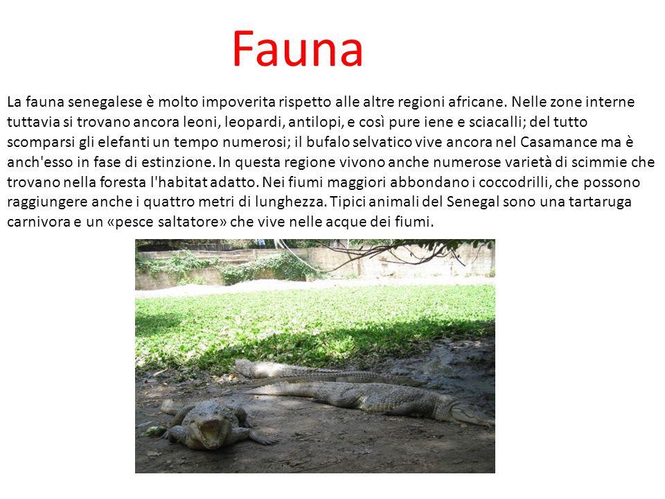 Fauna La fauna senegalese è molto impoverita rispetto alle altre regioni africane. Nelle zone interne tuttavia si trovano ancora leoni, leopardi, anti