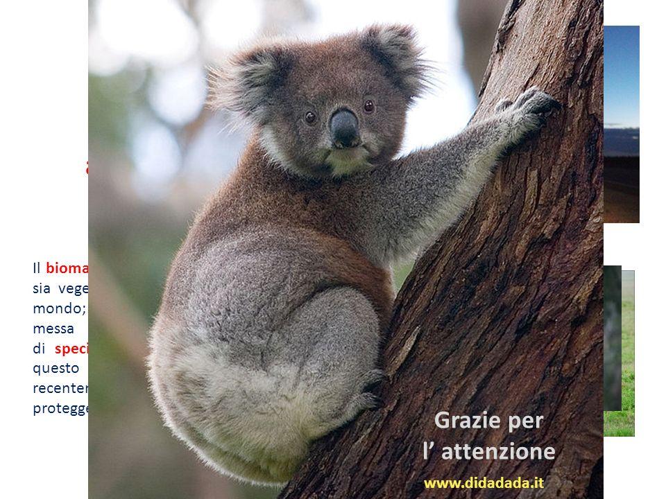 Il bioma australiano è caratterizzato da specie sia vegetali che animali endemiche uniche al mondo; questa particolarità floro-faunistica è messa in s
