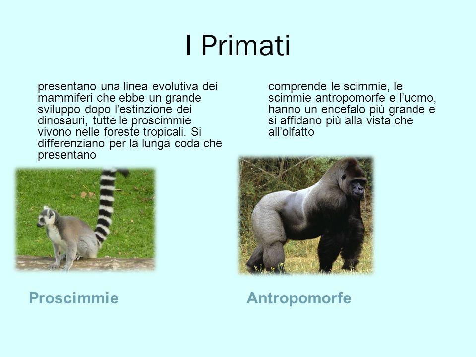 I Primati ProscimmieAntropomorfe presentano una linea evolutiva dei mammiferi che ebbe un grande sviluppo dopo lestinzione dei dinosauri, tutte le pro