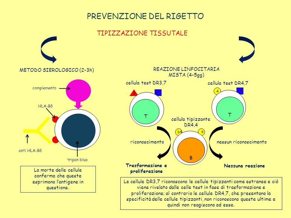 PREVENZIONE DEL RIGETTO TIPIZZAZIONE TISSUTALE METODO SIEROLOGICO (2-3h) complemento HLA-B8 anti HLA-B8 tripan blue La morte delle cellule conferma ch