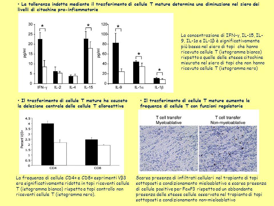 La tolleranza indotta mediante il trasferimento di cellule T mature determina una diminuzione nel siero dei livelli di citochine pro-infiammatorie La