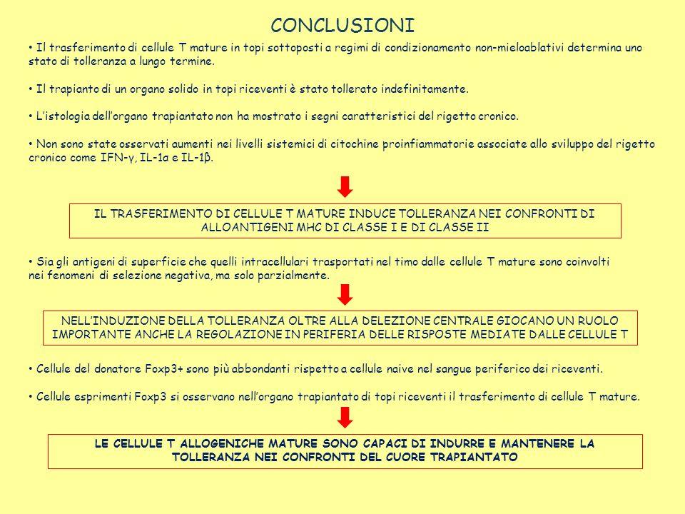 CONCLUSIONI Il trasferimento di cellule T mature in topi sottoposti a regimi di condizionamento non-mieloablativi determina uno stato di tolleranza a