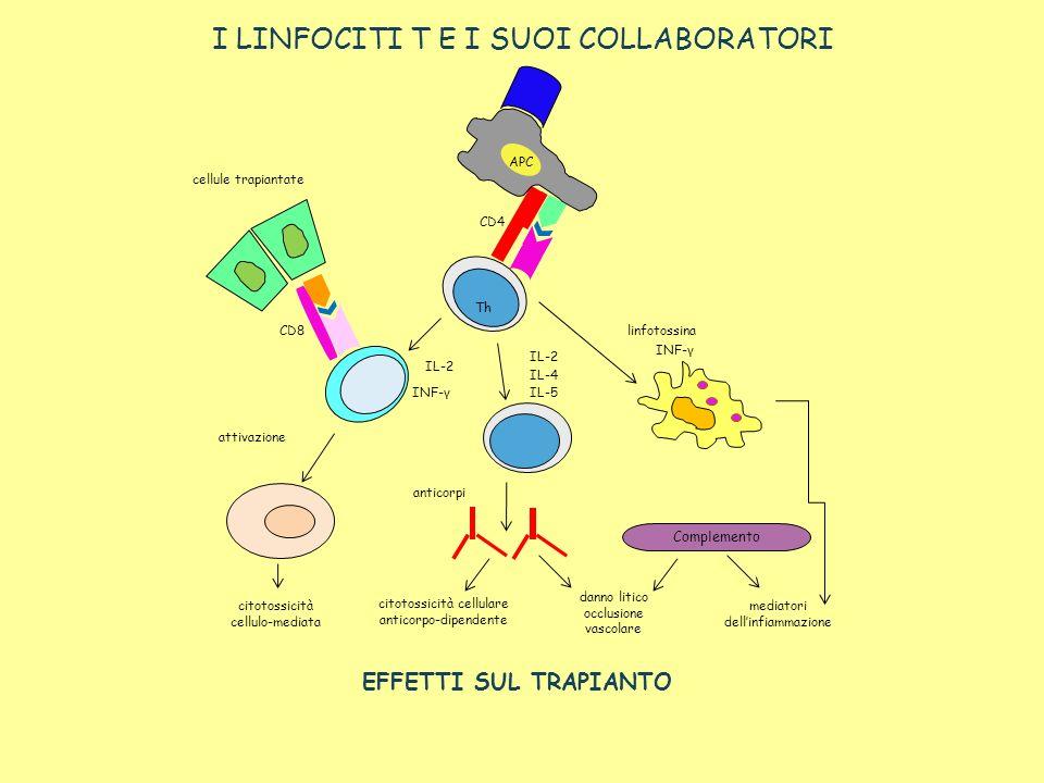 I LINFOCITI T E I SUOI COLLABORATORI EFFETTI SUL TRAPIANTO Complemento APC Th CD4 CD8 IL-2 INF-γ IL-2 IL-4 IL-5 linfotossina INF-γ anticorpi attivazio