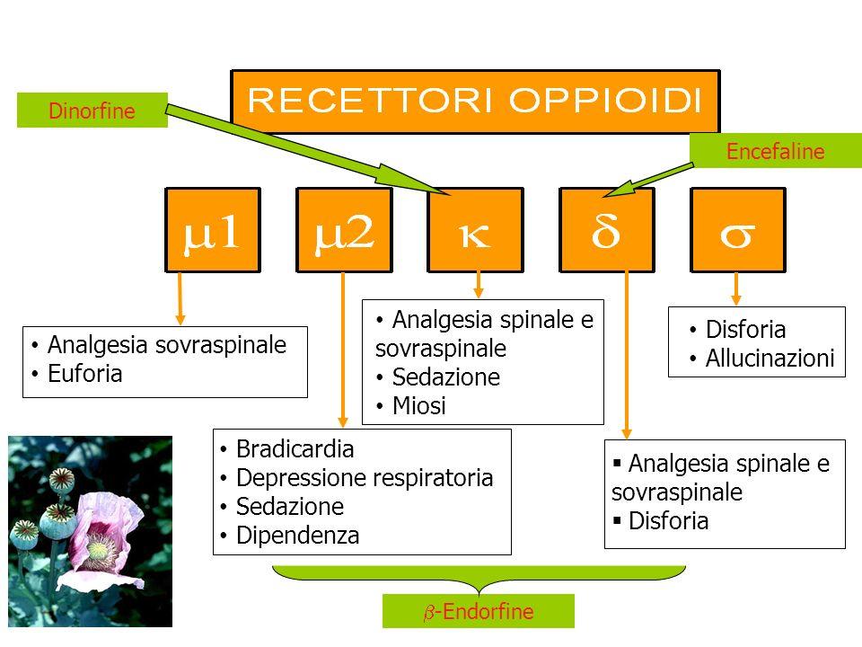 Analgesia sovraspinale Euforia Bradicardia Depressione respiratoria Sedazione Dipendenza Analgesia spinale e sovraspinale Disforia Allucinazioni Analg