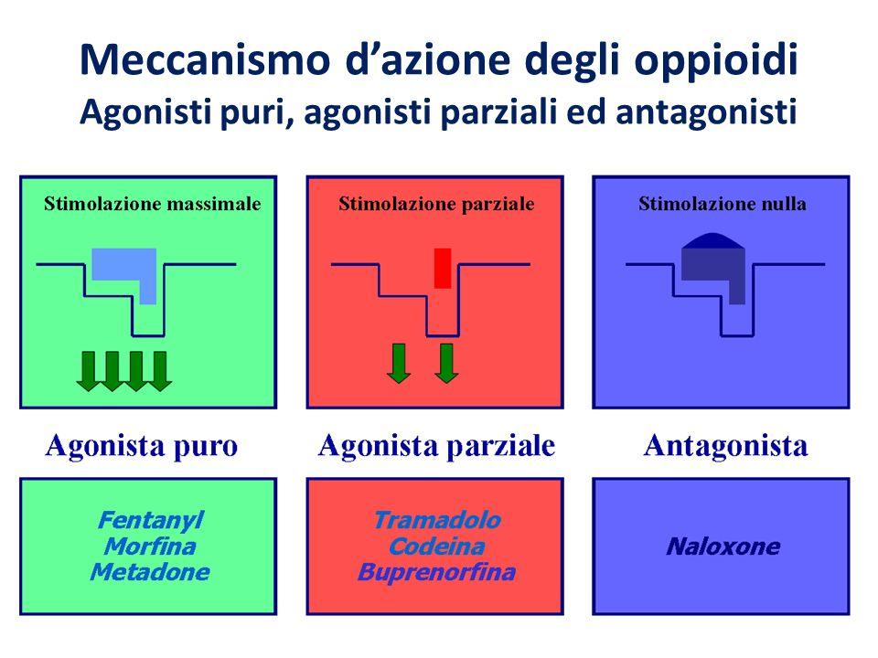 Meccanismo dazione degli oppioidi Agonisti puri, agonisti parziali ed antagonisti