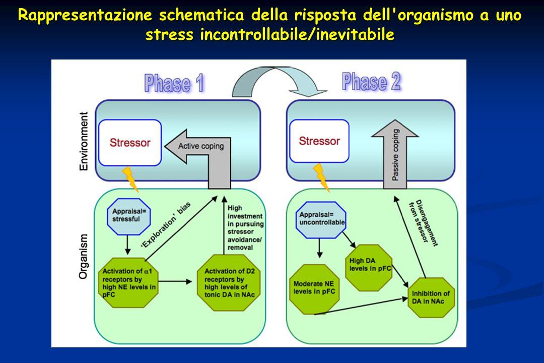 Rappresentazione schematica della risposta dell'organismo a uno stress incontrollabile/inevitabile
