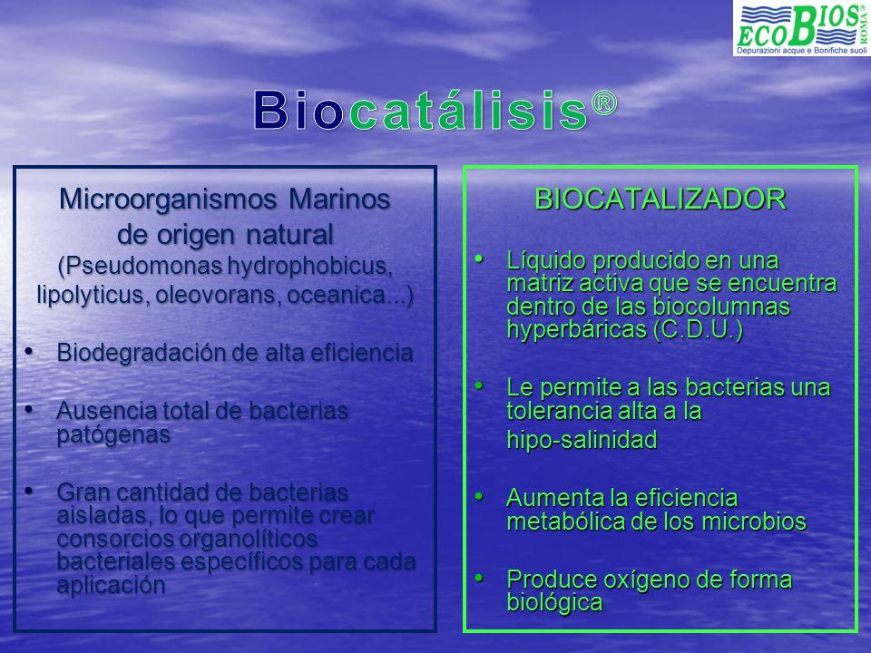 Agresión natural de las bacterias marinas a una gota de aceite EL CONSORCIO BACTERIAL Bacteria bioluminescente organolítica