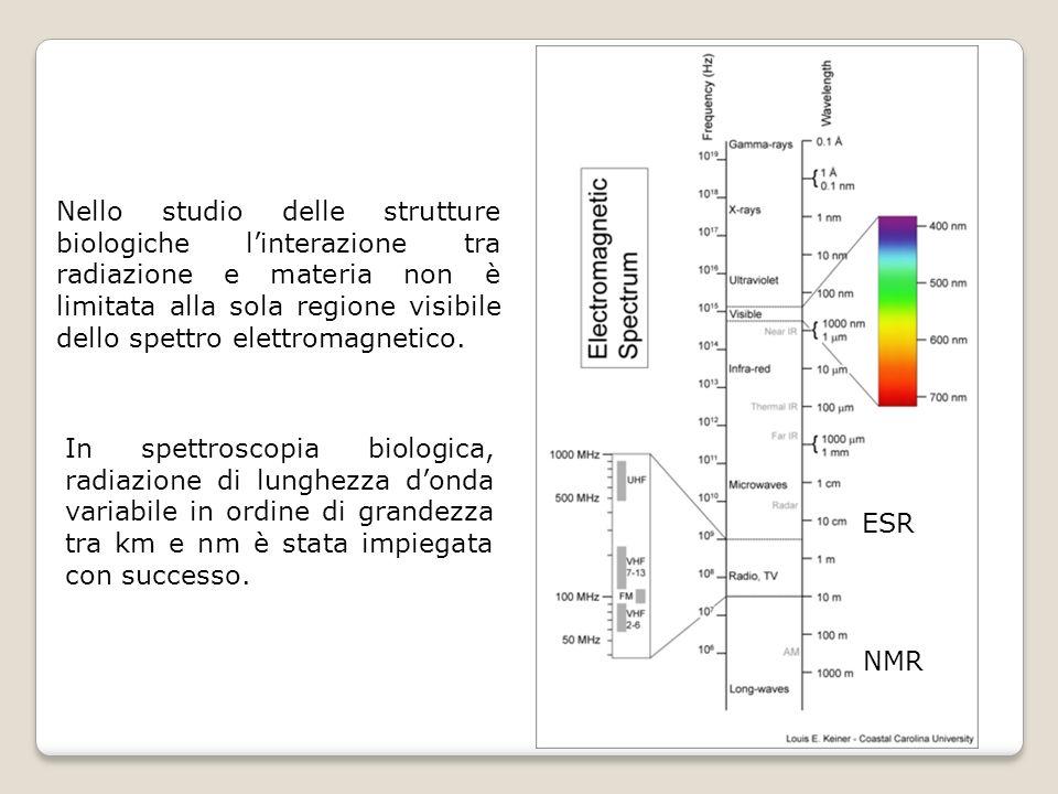 Nello studio delle strutture biologiche linterazione tra radiazione e materia non è limitata alla sola regione visibile dello spettro elettromagnetico