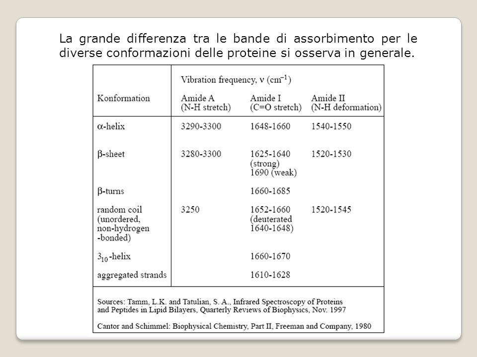 La grande differenza tra le bande di assorbimento per le diverse conformazioni delle proteine si osserva in generale.