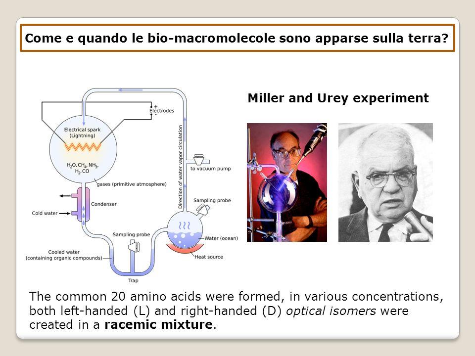Come e quando le bio-macromolecole sono apparse sulla terra? Miller and Urey experiment The common 20 amino acids were formed, in various concentratio