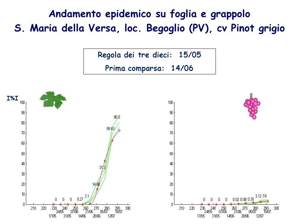 Andamento epidemico su foglia e grappolo S. Maria della Versa, loc. Begoglio (PV), cv Pinot grigio Regola dei tre dieci: 15/05 Prima comparsa: 14/06 I