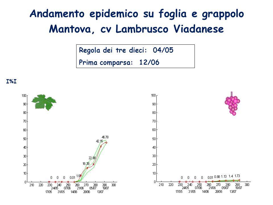 Andamento epidemico su foglia e grappolo Mantova, cv Lambrusco Viadanese Regola dei tre dieci: 04/05 Prima comparsa: 12/06 I%I