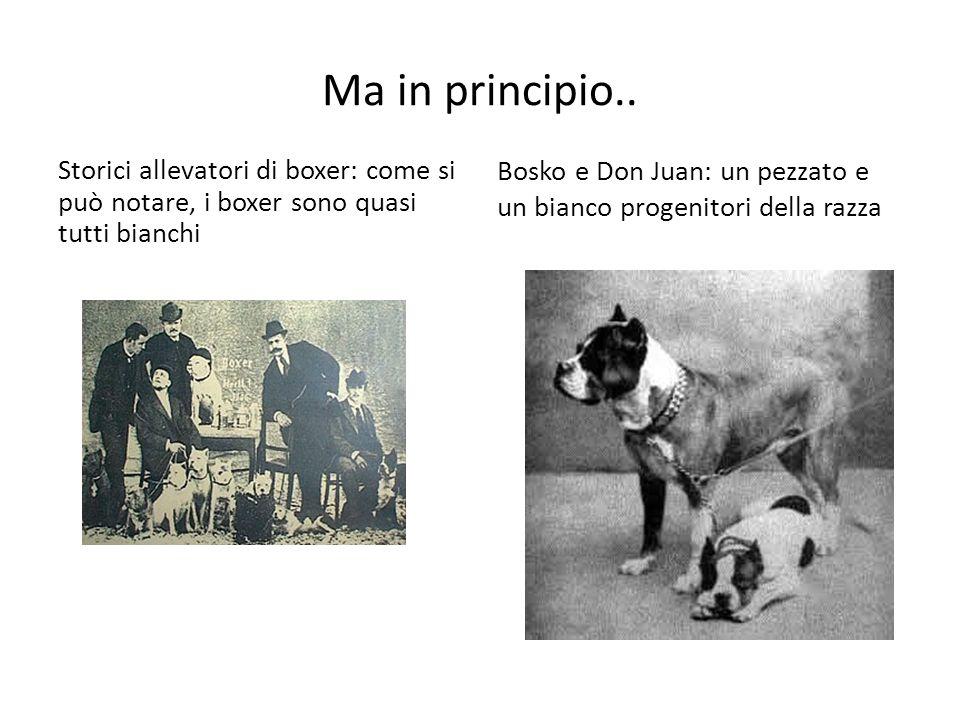 Ma in principio.. Storici allevatori di boxer: come si può notare, i boxer sono quasi tutti bianchi Bosko e Don Juan: un pezzato e un bianco progenito