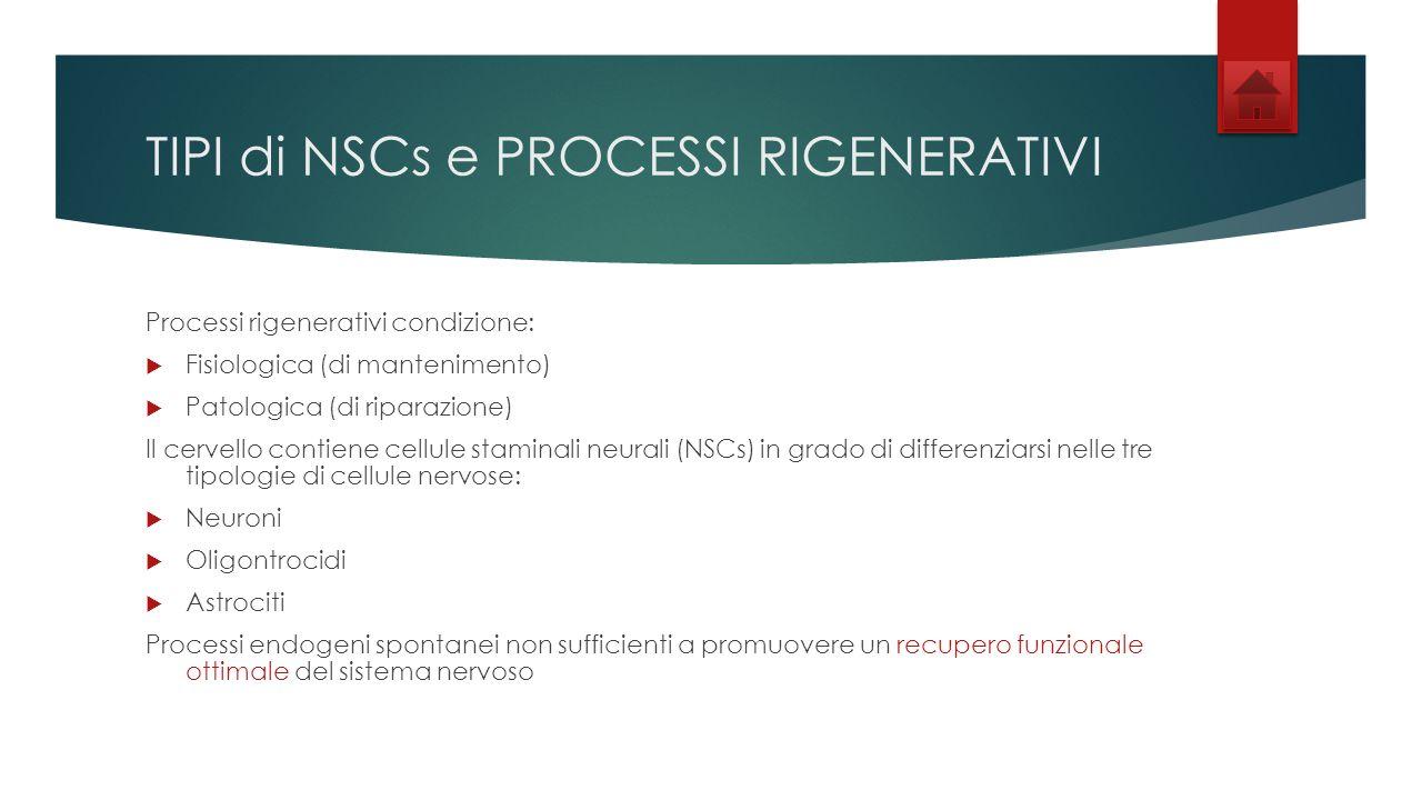 TIPI di NSCs e PROCESSI RIGENERATIVI Processi rigenerativi condizione: Fisiologica (di mantenimento) Patologica (di riparazione) Il cervello contiene cellule staminali neurali (NSCs) in grado di differenziarsi nelle tre tipologie di cellule nervose: Neuroni Oligontrocidi Astrociti Processi endogeni spontanei non sufficienti a promuovere un recupero funzionale ottimale del sistema nervoso