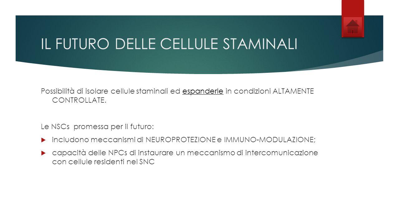 IL FUTURO DELLE CELLULE STAMINALI Possibilità di isolare cellule staminali ed espanderle in condizioni ALTAMENTE CONTROLLATE.espanderle Le NSCs promes