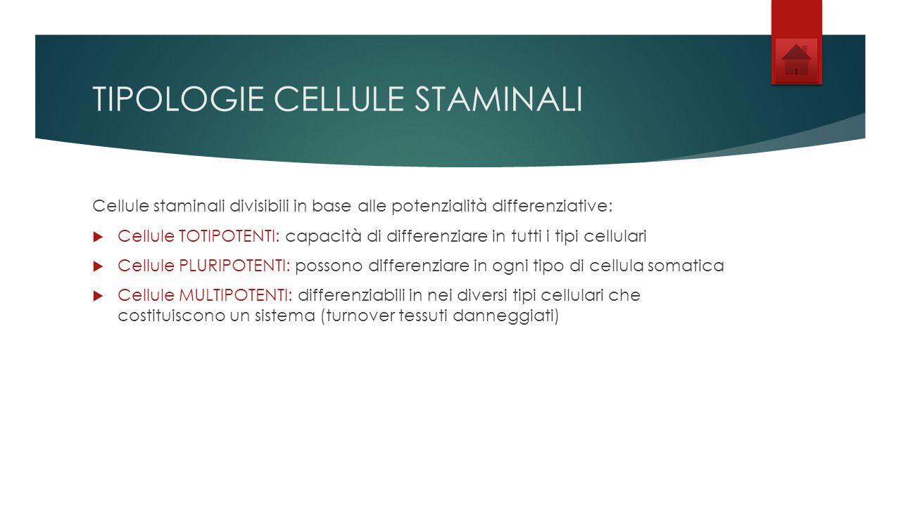 TIPOLOGIE CELLULE STAMINALI Cellule staminali divisibili in base alle potenzialità differenziative: Cellule TOTIPOTENTI: capacità di differenziare in tutti i tipi cellulari Cellule PLURIPOTENTI: possono differenziare in ogni tipo di cellula somatica Cellule MULTIPOTENTI: differenziabili in nei diversi tipi cellulari che costituiscono un sistema (turnover tessuti danneggiati)