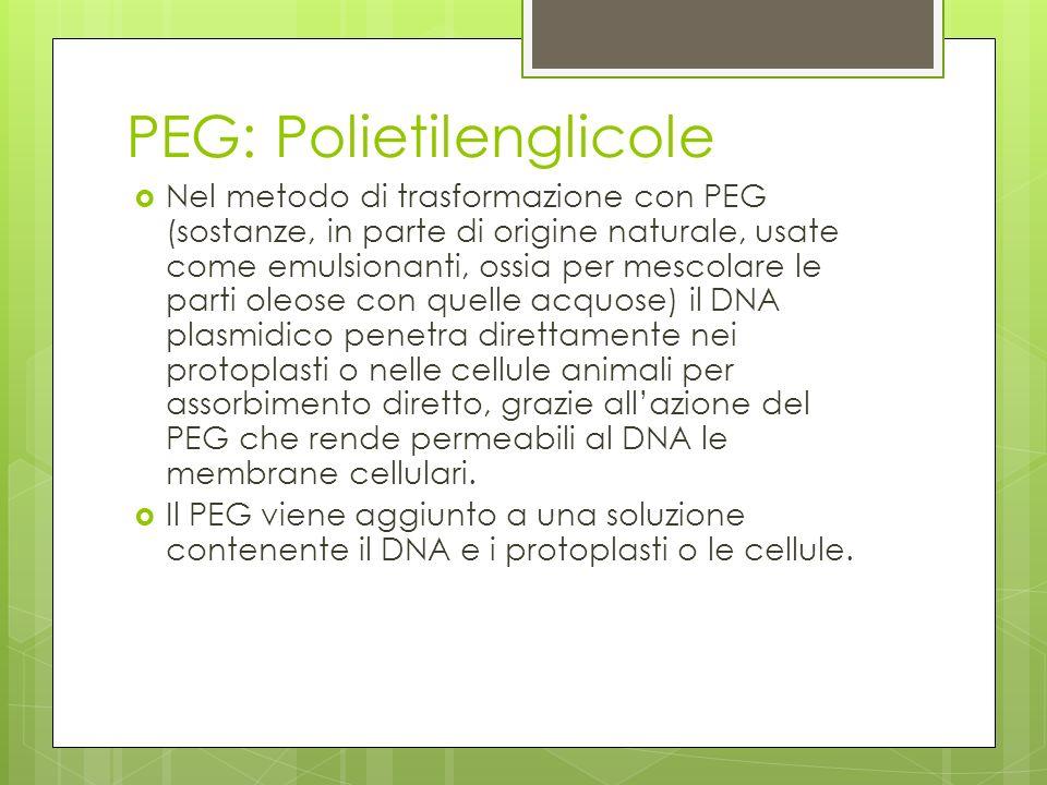 PEG: Polietilenglicole Nel metodo di trasformazione con PEG (sostanze, in parte di origine naturale, usate come emulsionanti, ossia per mescolare le p