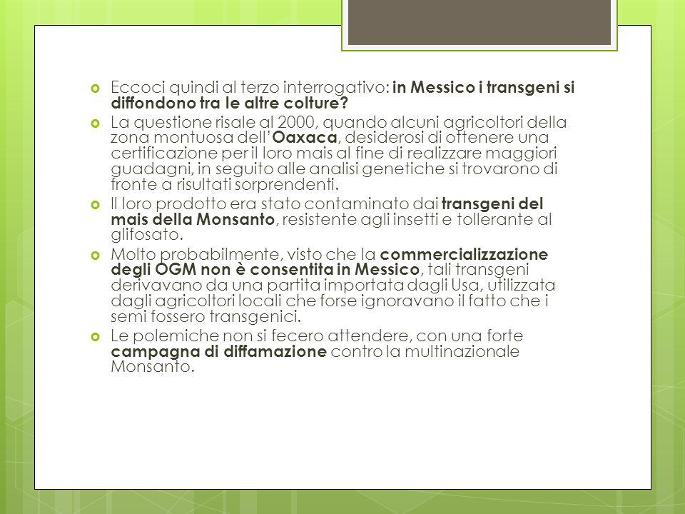 Eccoci quindi al terzo interrogativo: in Messico i transgeni si diffondono tra le altre colture? La questione risale al 2000, quando alcuni agricoltor