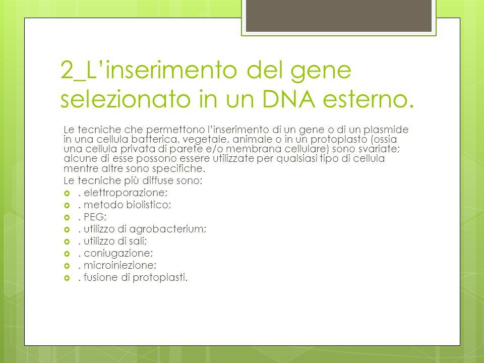 2_Linserimento del gene selezionato in un DNA esterno. Le tecniche che permettono linserimento di un gene o di un plasmide in una cellula batterica, v
