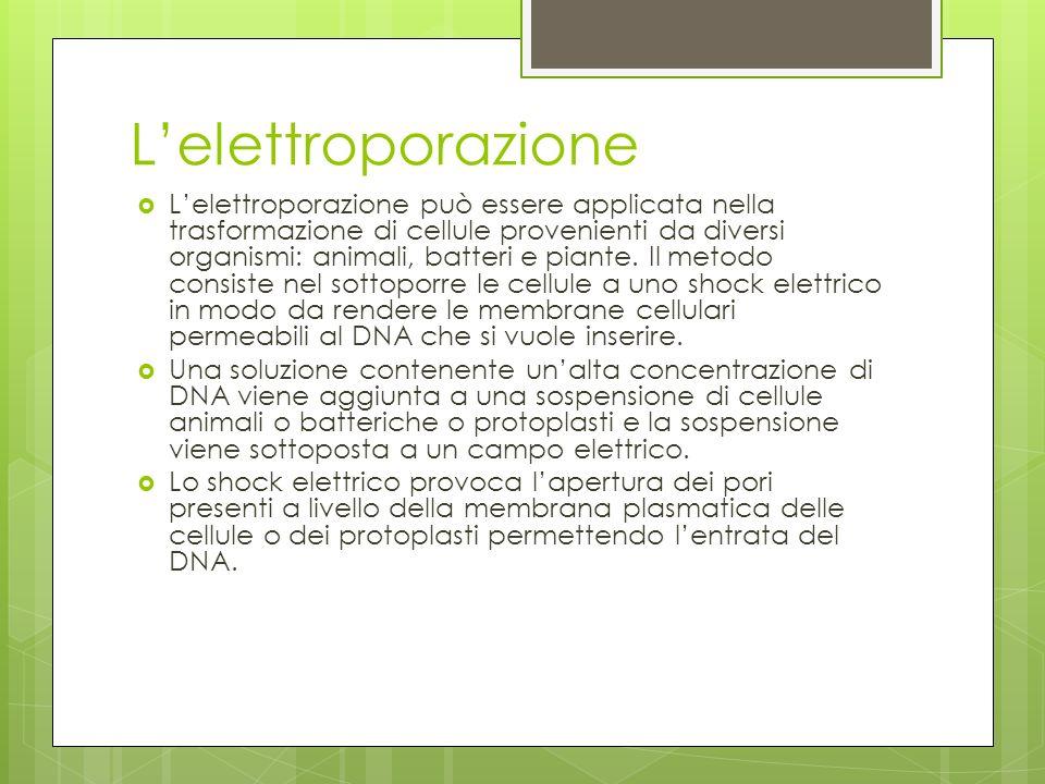 Lelettroporazione Lelettroporazione può essere applicata nella trasformazione di cellule provenienti da diversi organismi: animali, batteri e piante.