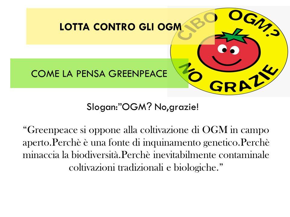 COME LA PENSA GREENPEACE Greenpeace si oppone alla coltivazione di OGM in campo aperto.Perchè è una fonte di inquinamento genetico.Perchè minaccia la