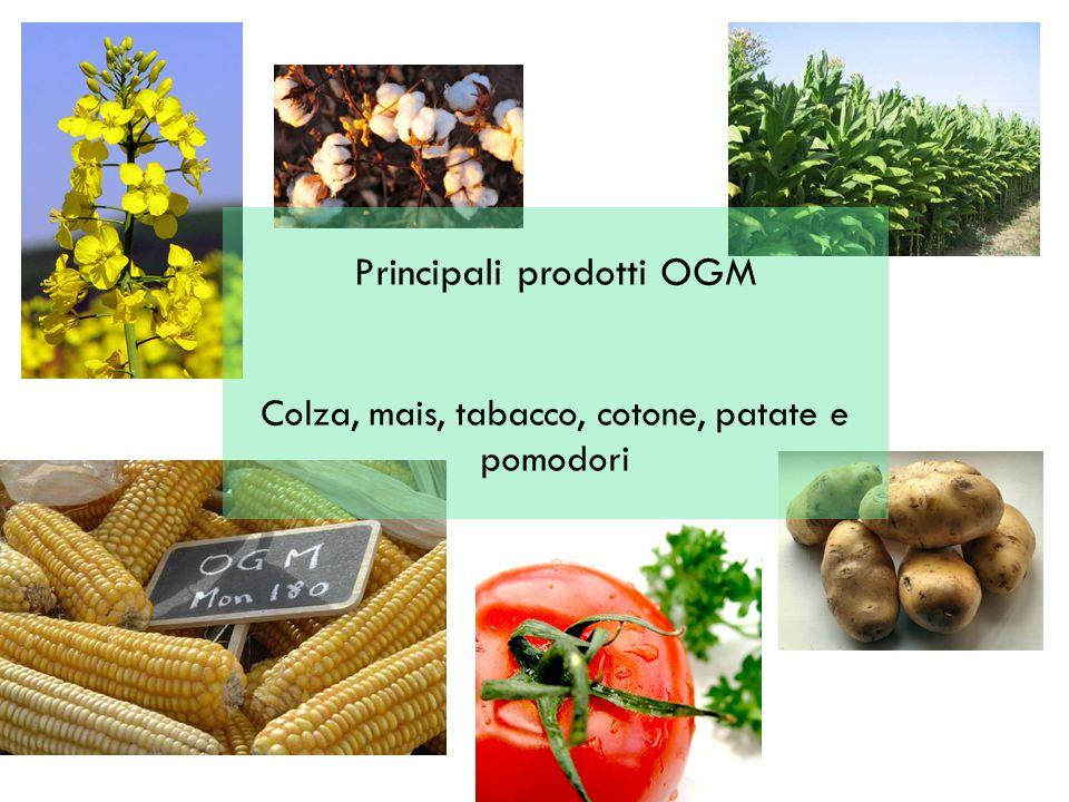 Principali prodotti OGM Colza, mais, tabacco, cotone, patate e pomodori