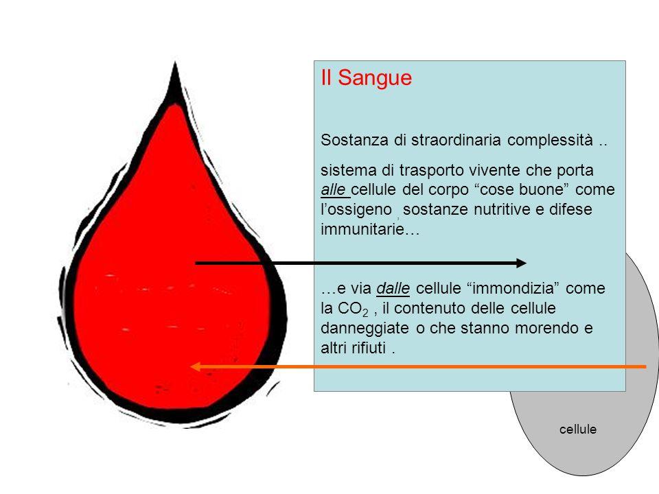 Il Sangue Sostanza di straordinaria complessità.. sistema di trasporto vivente che porta alle cellule del corpo cose buone come lossigeno, sostanze nu