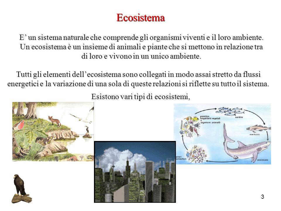 4 LEcosistema città occupa solo la duecentesima parte della superficie terrestre ma consuma energia e produce emissioni climalteranti