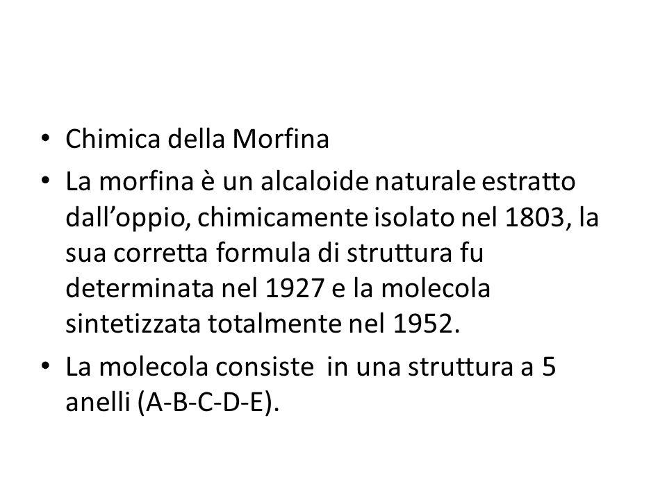 Chimica della Morfina La morfina è un alcaloide naturale estratto dalloppio, chimicamente isolato nel 1803, la sua corretta formula di struttura fu de