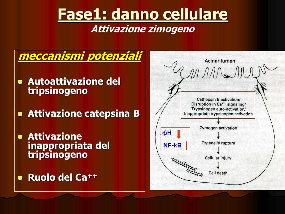 Fase1: danno cellulare Fase1: danno cellulare Attivazione zimogeno meccanismi potenziali Autoattivazione del tripsinogeno Autoattivazione del tripsino
