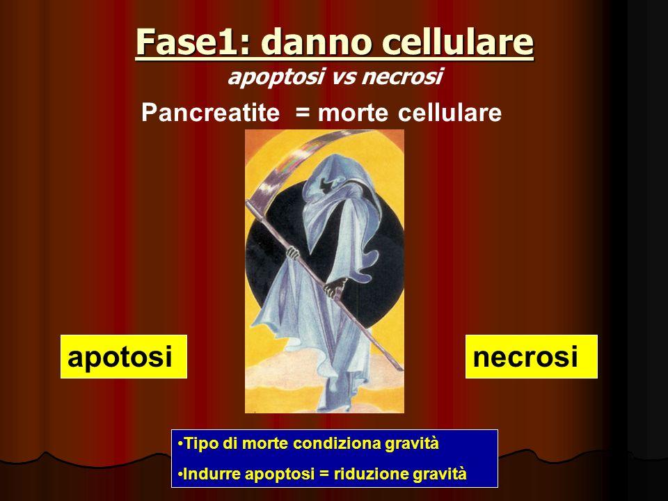 Fase1: danno cellulare Fase1: danno cellulare apoptosi vs necrosi Pancreatite = morte cellulare apotosinecrosi Tipo di morte condiziona gravità Indurr