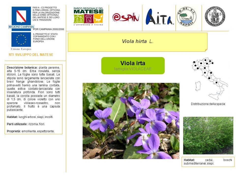 RTI SVILUPPO DEL MATESE Viola irta famiglia VIOLACEAE Viola hirta L. Descrizione botanica: pianta perenne, alta 5-15 cm. Erba rosulata, senza stoloni.